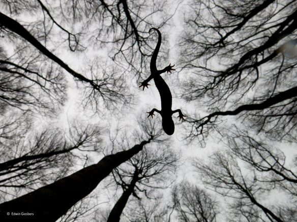 Still life by Edwin Giersbers